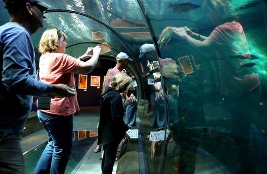 Guests watch the fish in the Halibut Flats exhibit at the Oregon Coast Aquarium in Newport June 21, 2018.