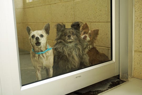 These are three of the 44 dogs that were taken from a Dover home last week after the elderly primary caregiver died.