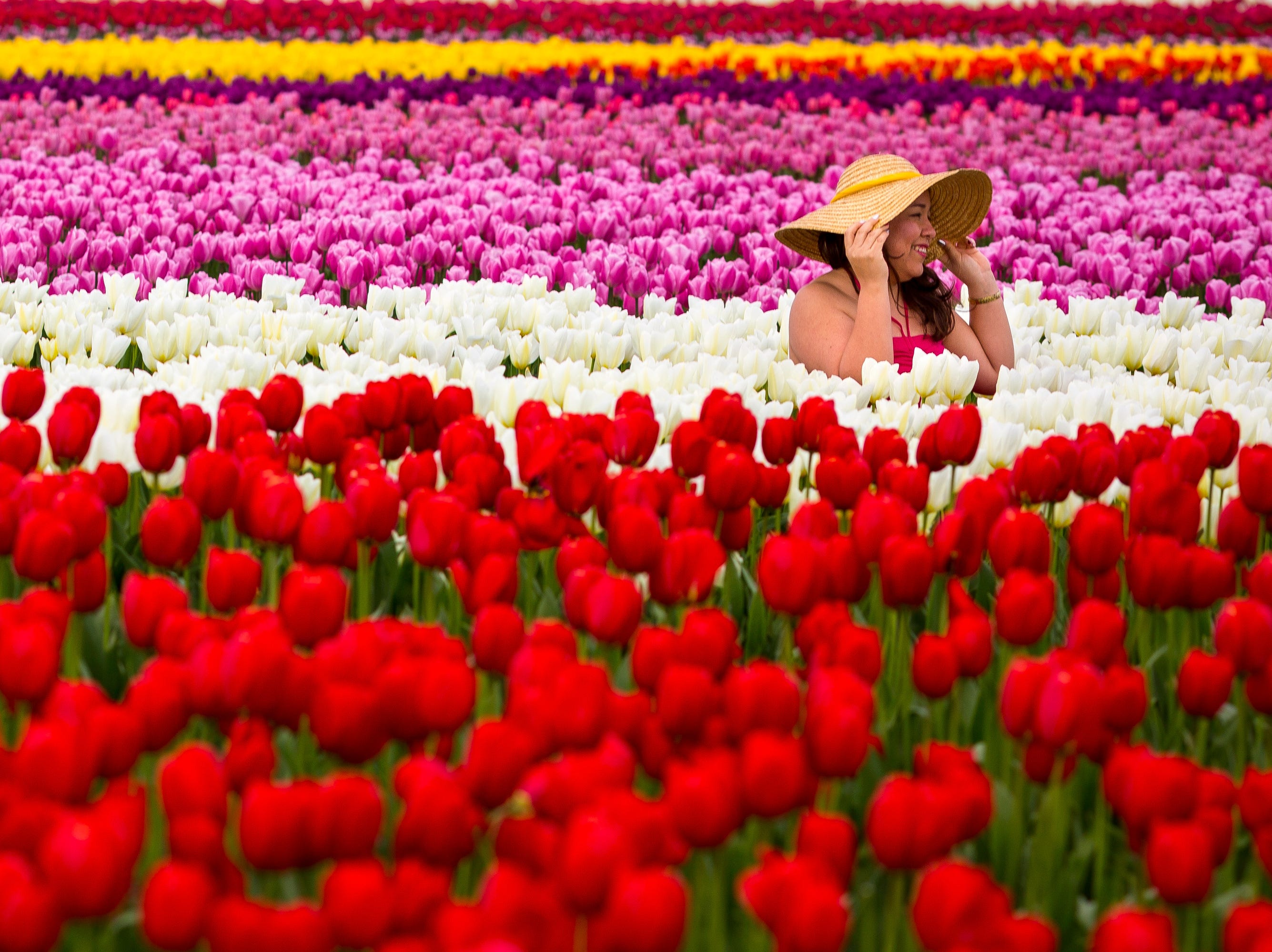 Lost in a sea of stunningly colorful bulbs, people pose for pictures during the annual Skagit Valley Tulip Festival Friday, April 11, 2014, between Mount Vernon and La Conner, Wash. Every year, hundreds of thousands of people come to the Skagit Valley in the spring to enjoy acres upon acres of nature's blossoming beauties. (AP Photo/seattlepi.com, Jordan Stead) ORG XMIT: WASEA104