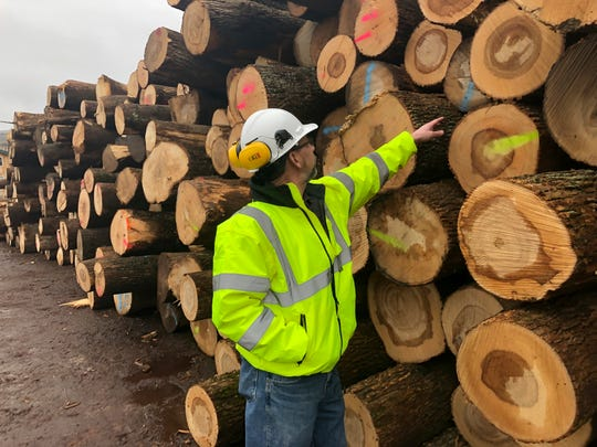 Tom Gerow, a general manager at The Wagner Companies, inspects ash logs Feb. 7 at the company's mill in Owego. The emerald ash borer is decimating ash trees in dozens of states and loggers are harvesting the popular wood while it's still available.