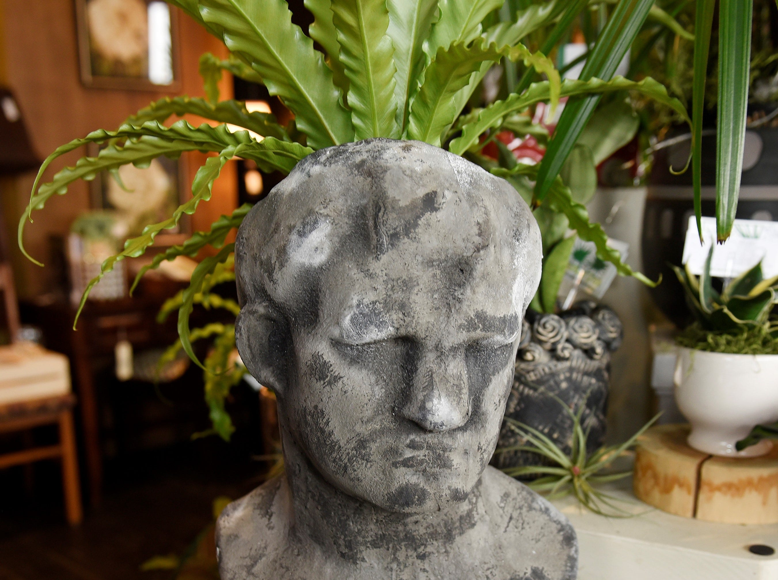 Talk about head games. Head-shaped planters are hot these days and they can display plants indoors or outdoors. At Southern Green, inside Tootsie and Tallulah in downtown Berkley, a cement bust planter makes a statement with a Bird's Nest Fern in it.