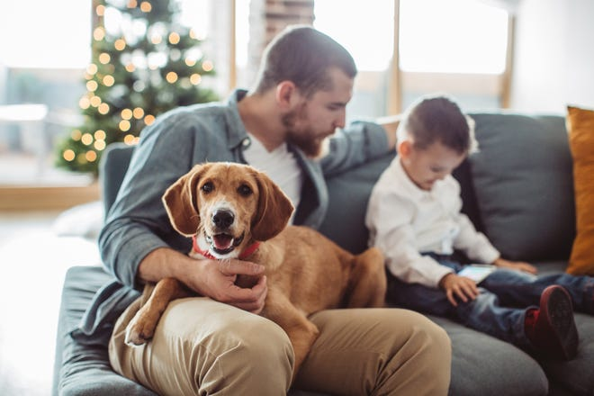 Our four-legged family members bring more than joy into our homes. Their hair can potentially cause damage to HVAC systems.