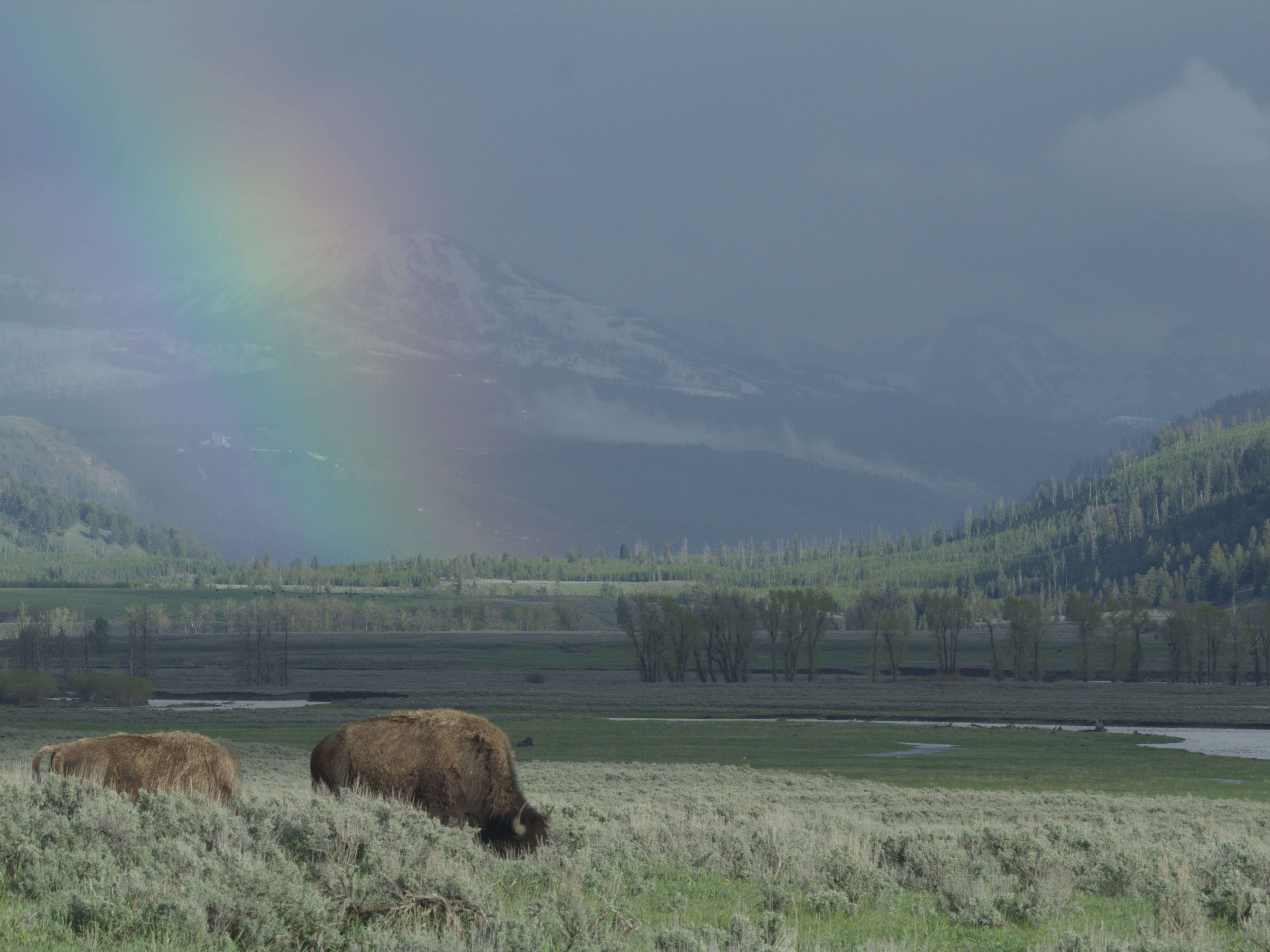 "A new four-part series called ""Epic Yellowstone"" follows the park and its wildlife through three years."