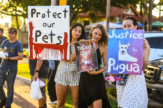Protesters gather along Marine Corps Drive in Hagåtña on Feb. 27, 2019 to express their opposition to the dismissal of felony charges against Gerald Wayne Cruz II, by Judge Michael Bordallo, in regards to the shooting of animals in Yigo last year. Pugua, a pet dog owned by Alexie and Nathan Mapson, was found fatally shot on Sept. 27, 2018, in a Yigo family's carport. Cruz was charged in the relation to th