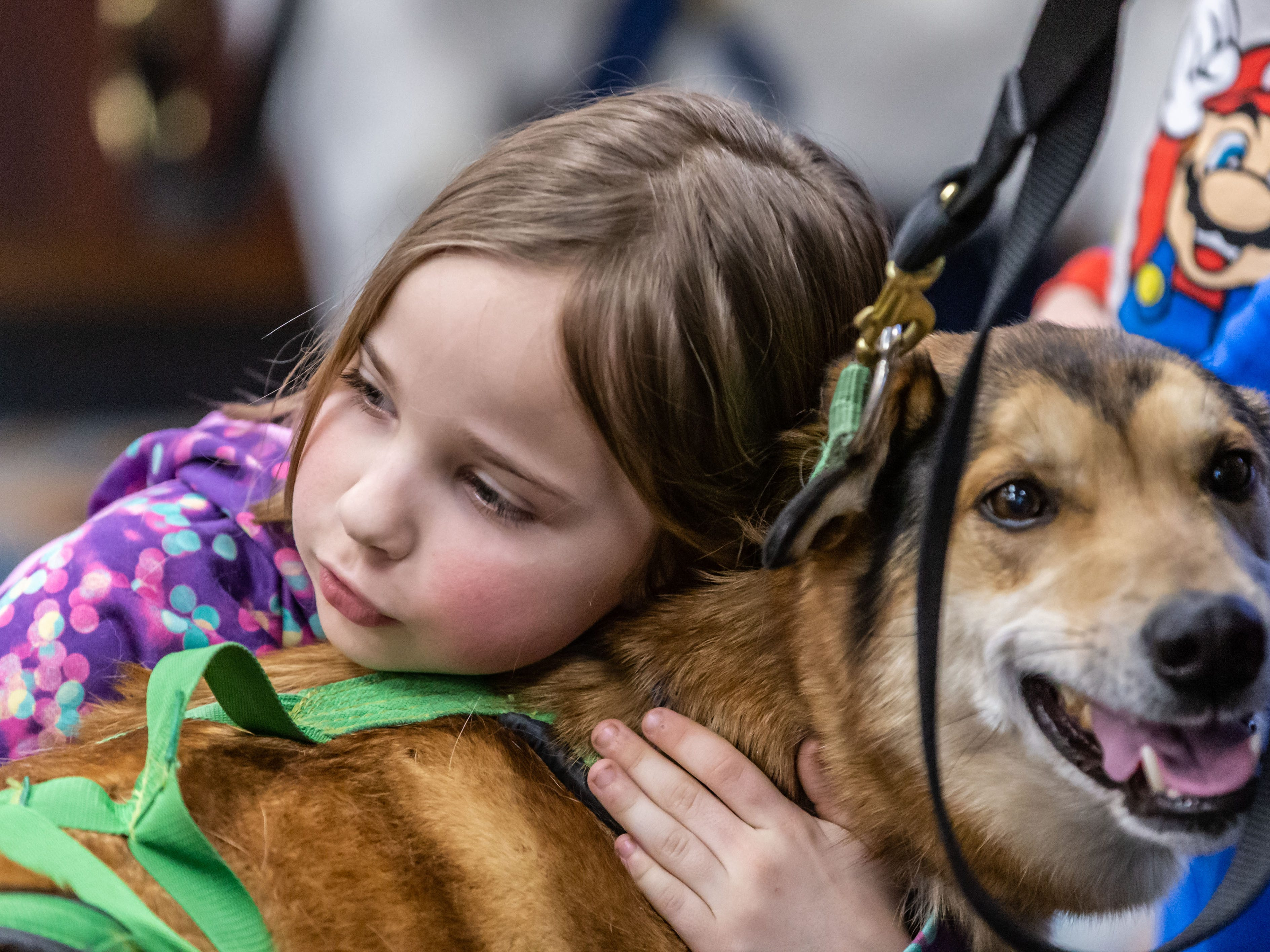 """Seven-year-old Leila Glorioso of Oconomowoc cuddles with one of the furry ambassadors from Door County Sled Dogs during an educational event at the Town Hall Library in North Lake on Monday, Feb. 25, 2019. The event is linked to the library's youth winter reading program """"Idita-Read""""."""
