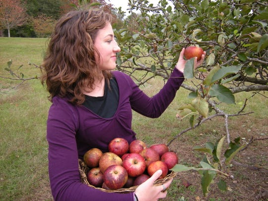 Lauren Gray harvests Black Twig apples from her family orchard. A March 15 workshop will help gardeners and farmers improve their fruit production. The gathering will take place from 9 a.m. to noon at the Founders Station, located at 4902 Pike Road.