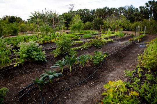 Vegetables and herbs grow in the Shangri-La Springs organic garden in Bonita Springs on Wednesday, February 27, 2019. A new restaurant, Harvest and Wisdom, will be opening soon at Shangri-La Springs, and majority of ingredients used in the restaurant will be harvested from the 4.5 acre garden.