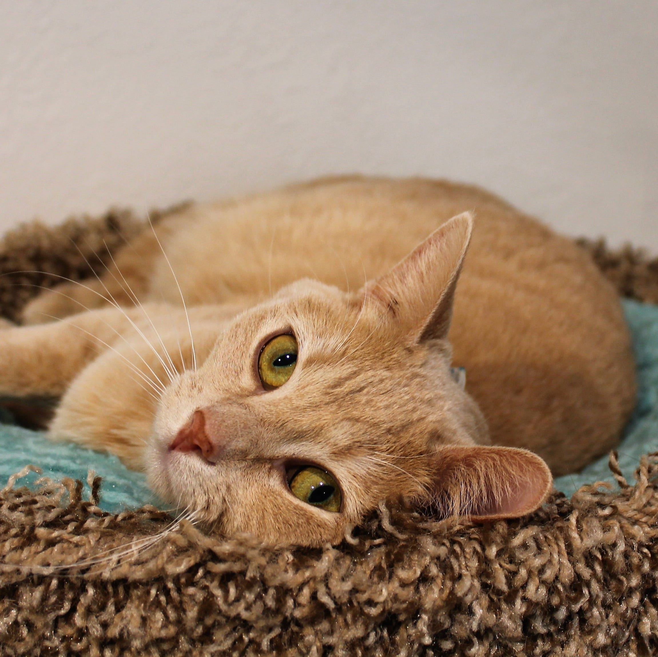 PETA opposed to Alamogordo cat program