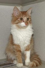 Charlie is very sweet and likes attention. He is 4 1/2 months old.