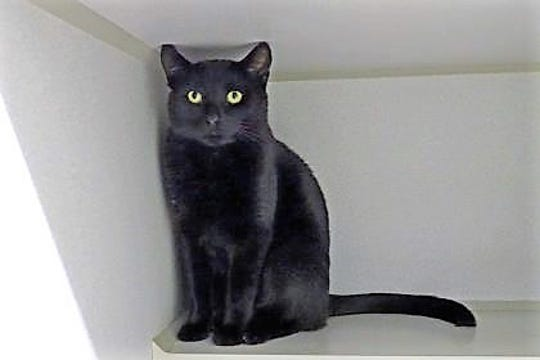 Wilson is a 2 1/2-year-old neutered male.