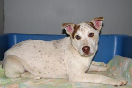 Luna is a 2-year-old spayed female. She is very well behaved indoors and she is leash, kennel and house trained.