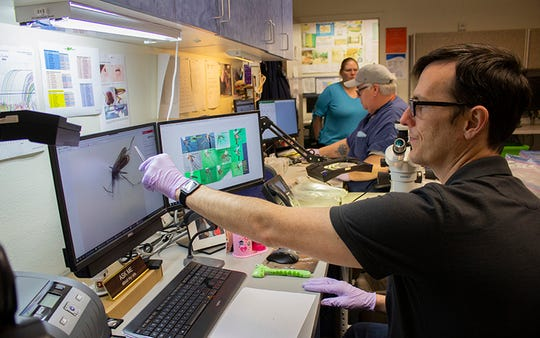 Steve Young, a vector technologist at Maricopa County Vector Control, examines mosquitoes to determine if they carry the West Nile virus, the most common mosquito-borne illness in Arizona.