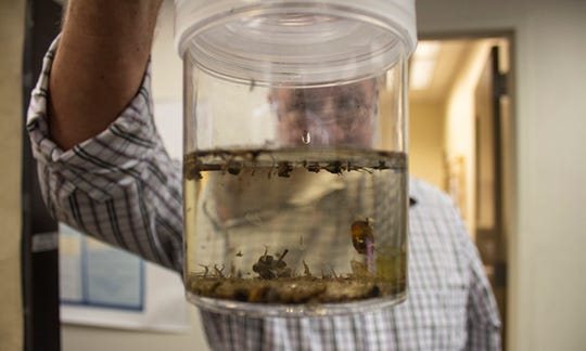 John Townsend, Maricopa County's Vector Control Division Manager, examines a sample of mosquitoes. While mosquitoes are often thought of as flying insects, they actually spend the first three stages of their life in water.