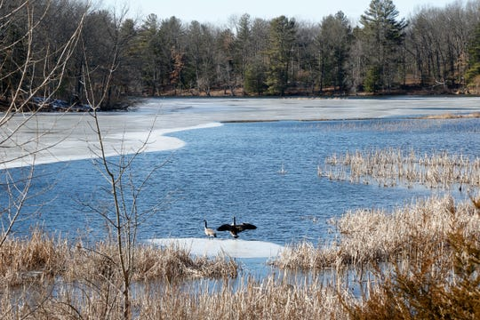 Geese prepare to take flight on Lake Walton which is beside the William R. Steinhaus Dutchess Rail Trail in East Fishkill on February 26, 2019. The lake is roughly 1.5 miles from the Hopewell Depot and about 1 mile from the Lake Walton parking lot.