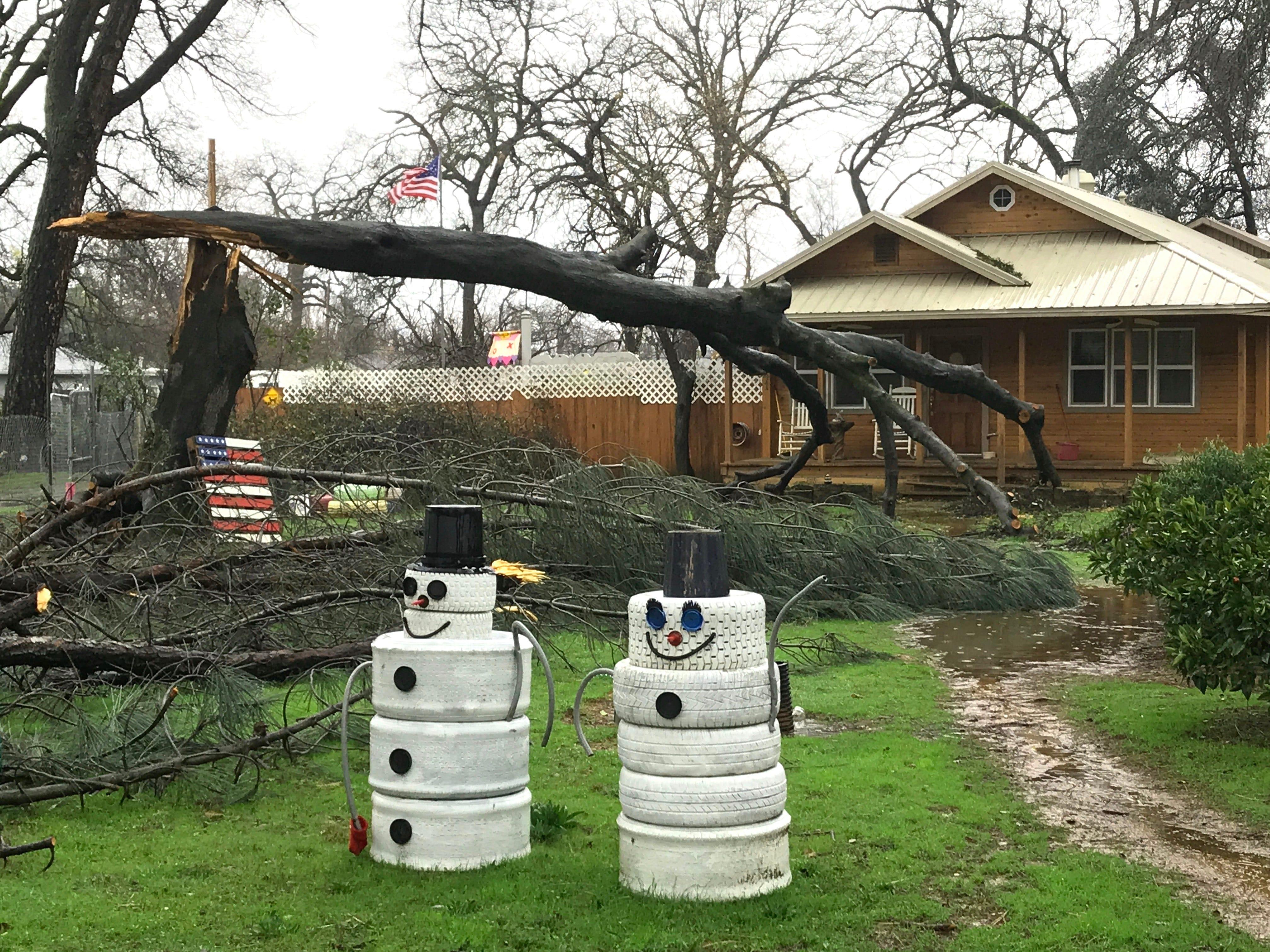 A tree lies sideways Feb. 27, 2019, along Jewell Lane following a February snowstorm that clobbered Redding.