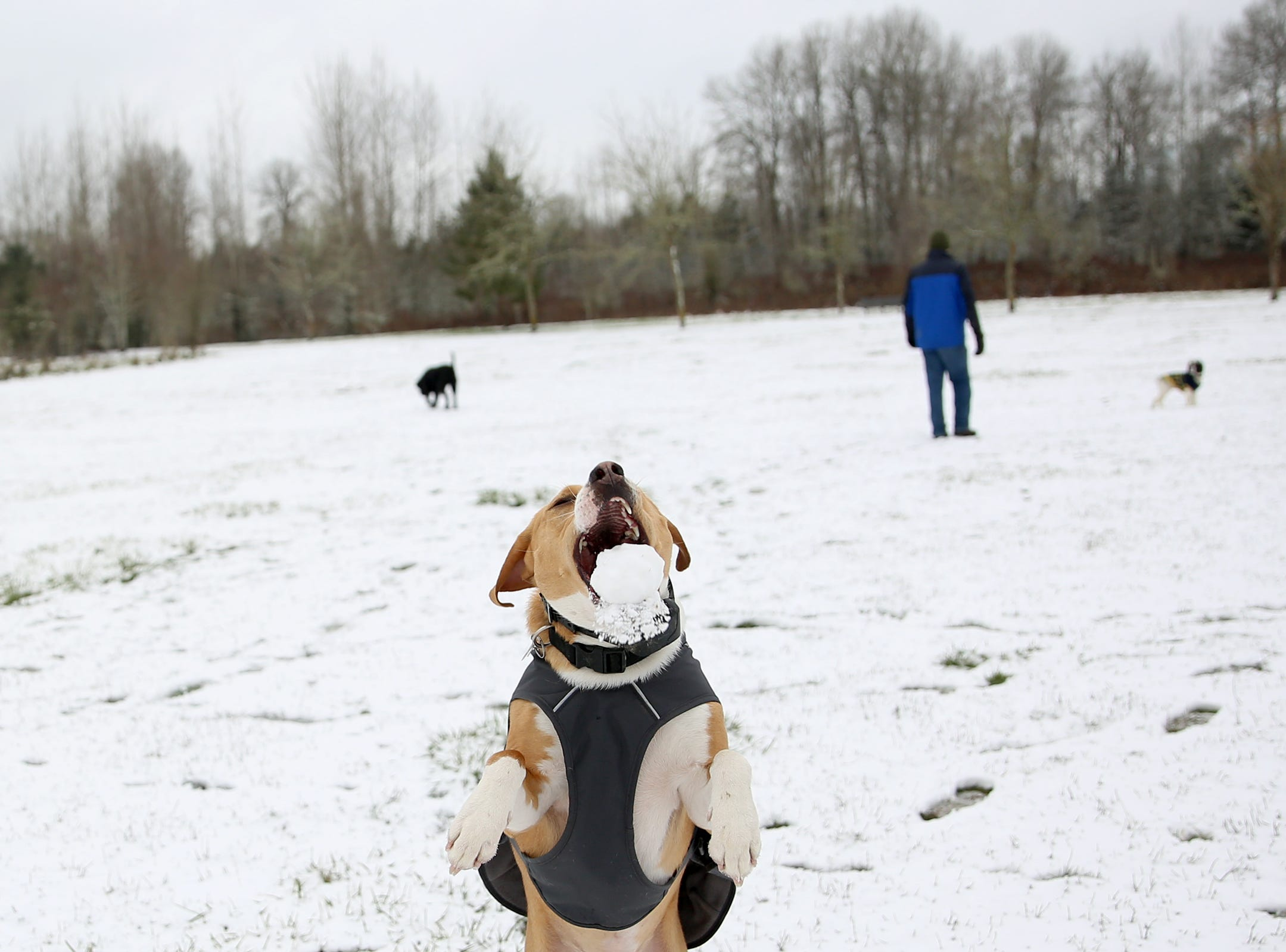 Oliver catches a snow ball in the air at Minto-Brown Island Park in Salem on Wednesday, Feb. 27, 2019.
