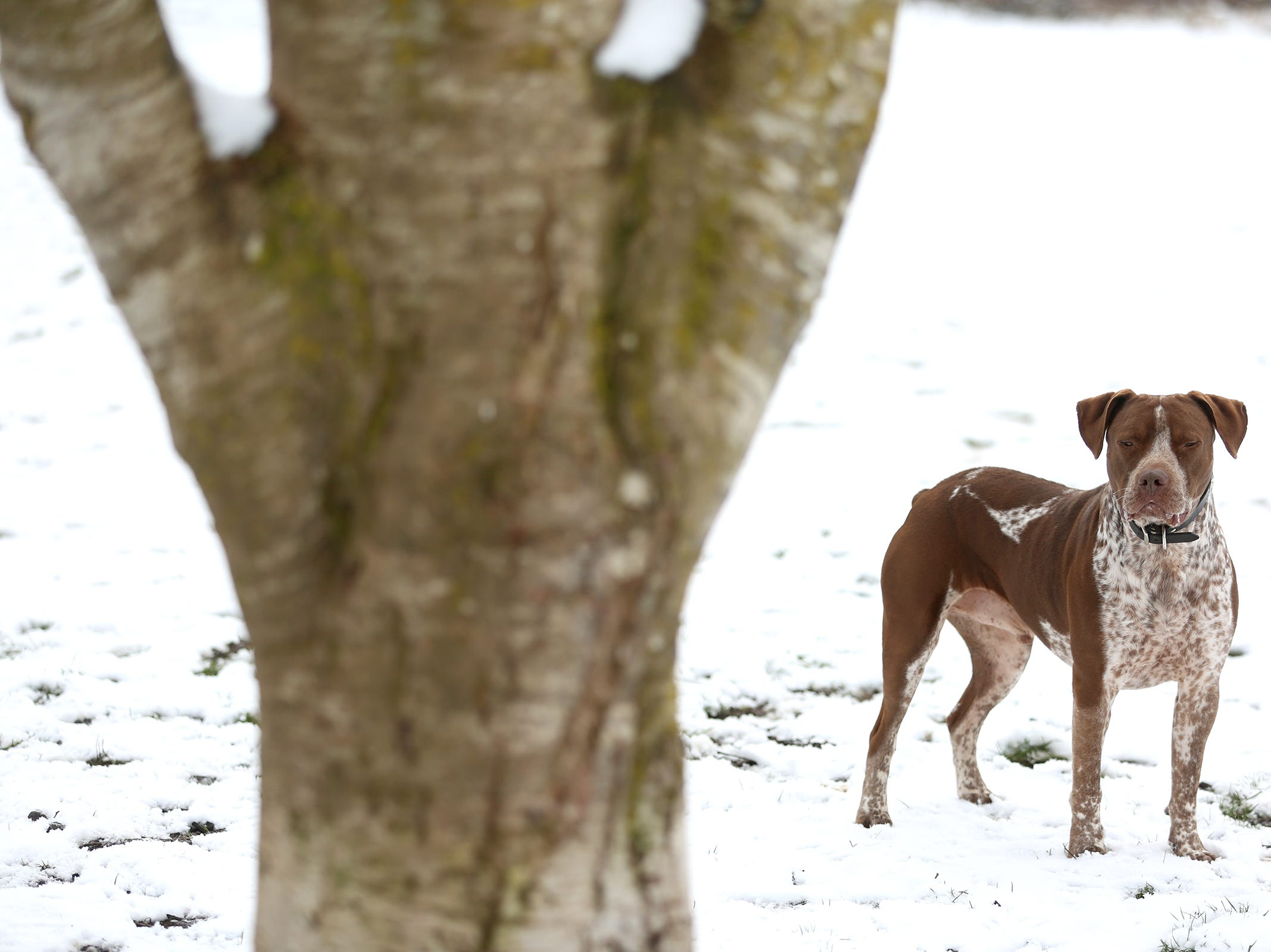 Buddy plays in the snow at Minto-Brown Island Park in Salem on Wednesday, Feb. 27, 2019.