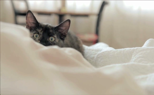 A screenshot from one of the many cat videos featured in CatVideoFest 2019, coming to Marcus Parkwood Cinema March 11.