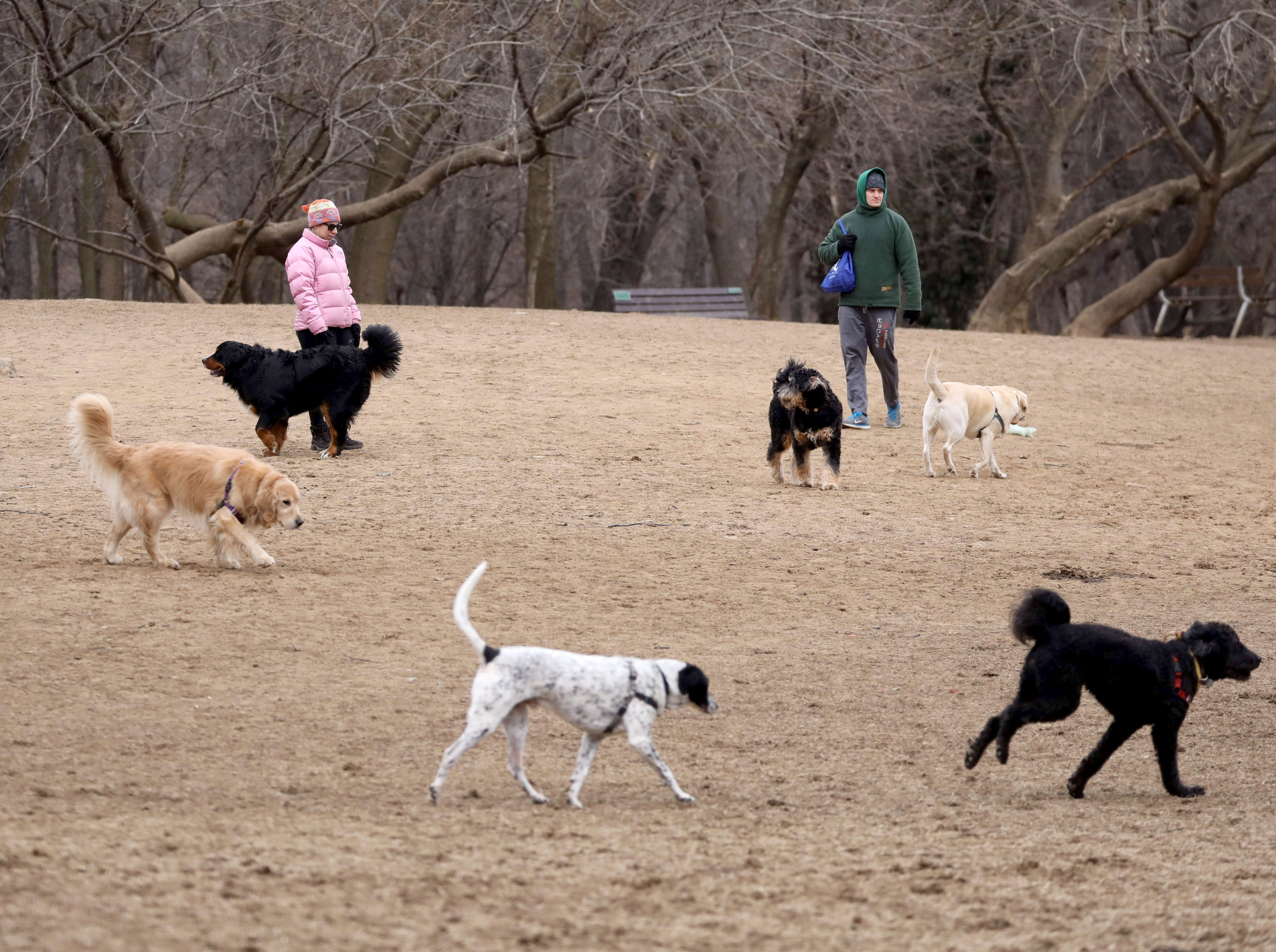 Dogs and owners enjoy the large Paws Place dog park at Ward Acres Park in New Rochelle, Feb. 27, 2019.