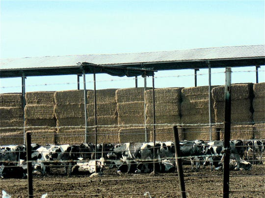 Chino California was covered with cows 20 years ago.