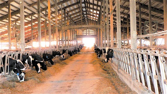 Dairies are designed around cow comfort, but little thought is often given to worker comfort.