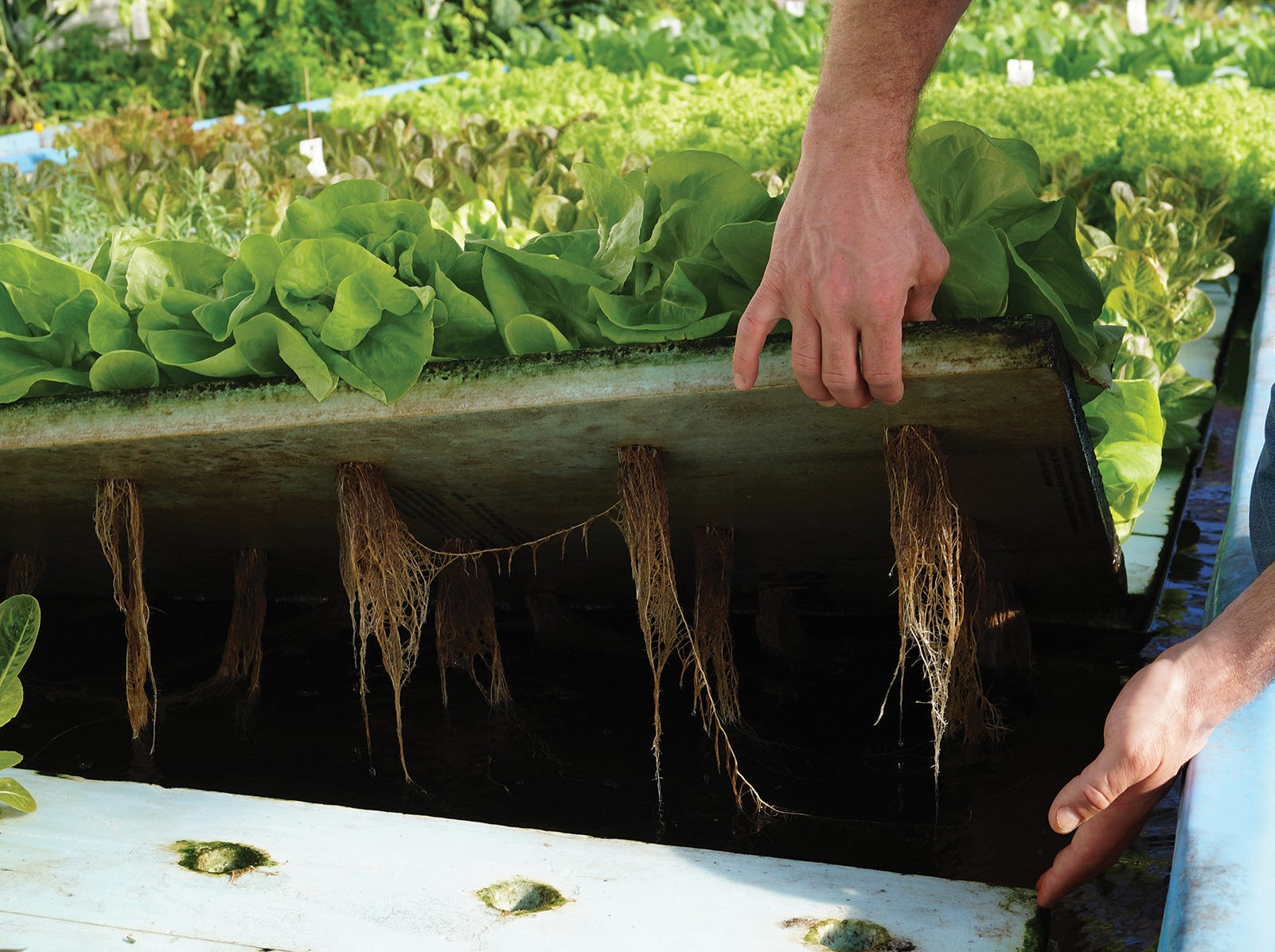 The consistent growing conditions that water provides, gives Lake Orchard Farm's produce intense flavor year-round.