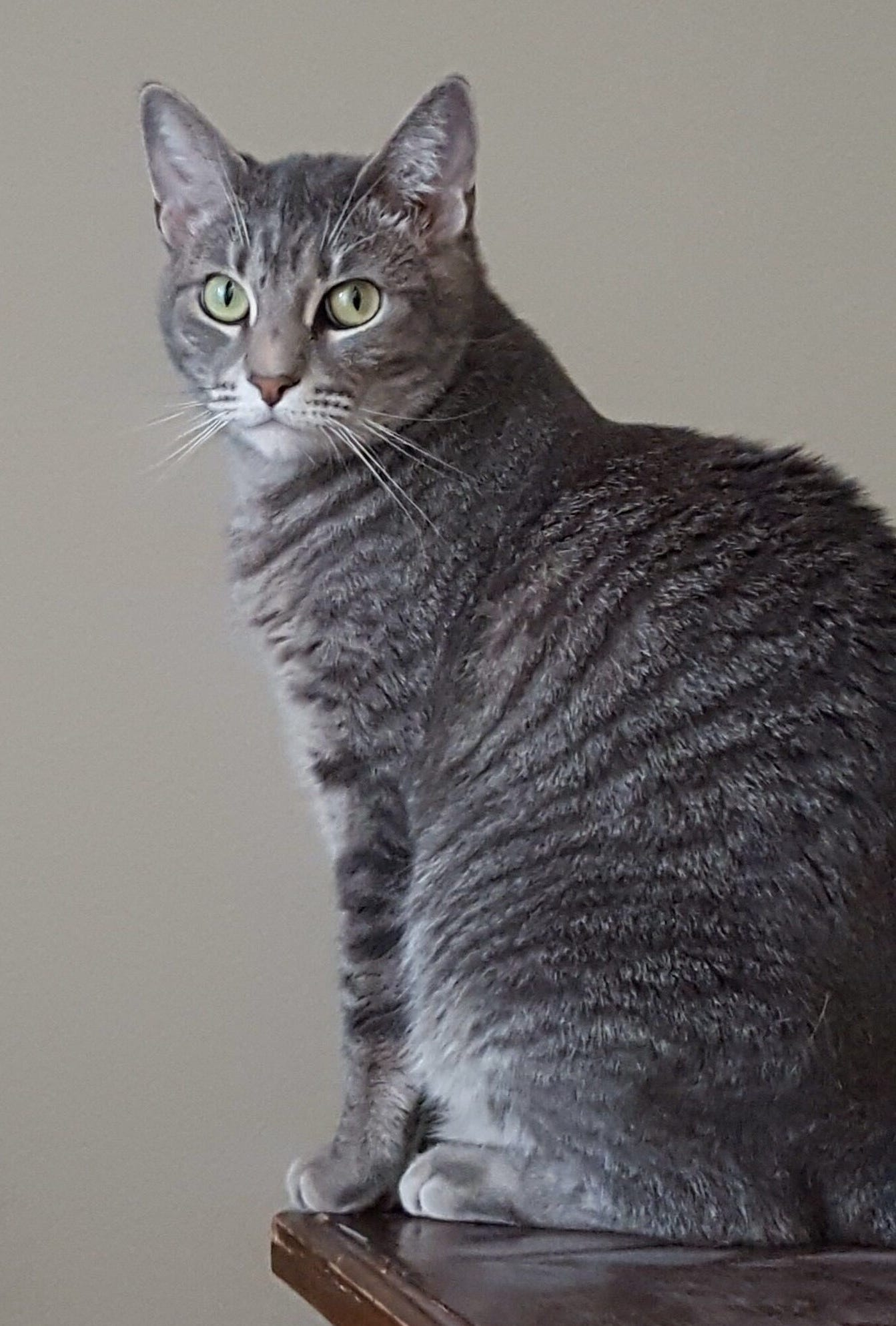 Bastet, a female gray tabby, was found dead in a mound of debris from the Feb. 24 pileup on Interstate 41 near Neenah.