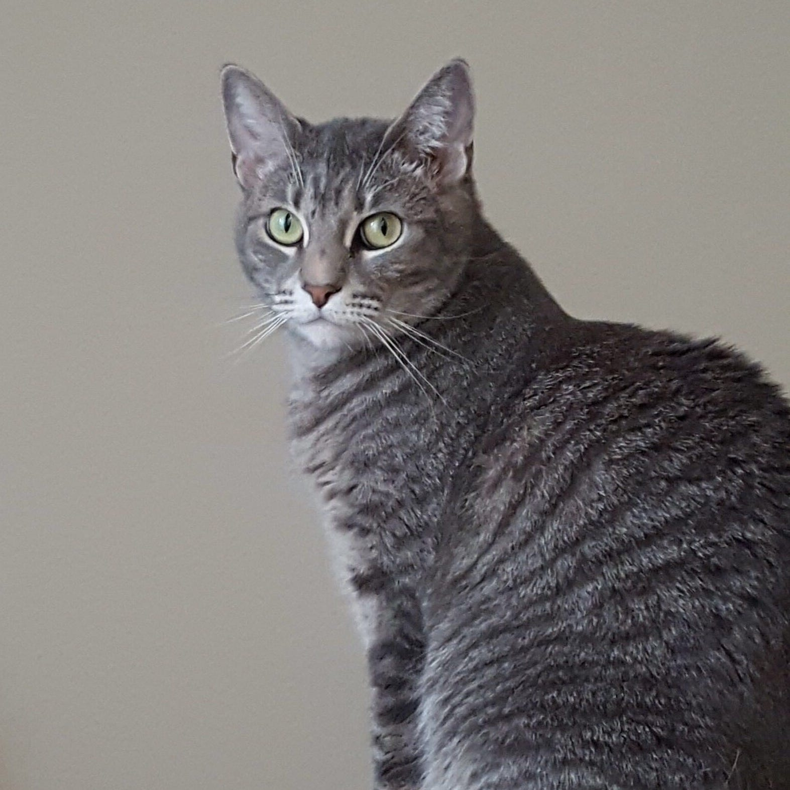 Bastet the cat hasn't been found, despite the best efforts of Wisconsinites