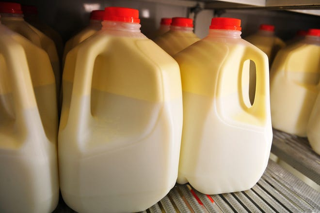 Fresh raw milk rests in a cooler, where the cream rises to the top.