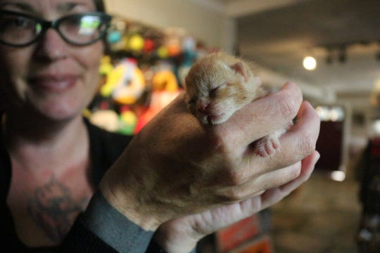 Newborn kittens like Matthew are in desperate need of foster homes, say local animal shelters.