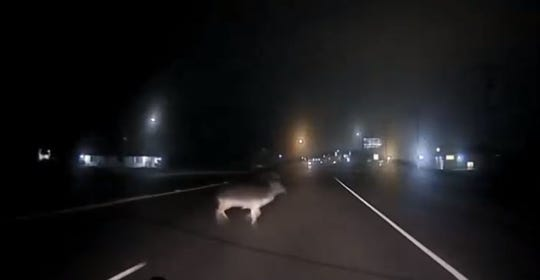 A video captures a deer crossing Farm to  Market Road 624 on Feb. 28, 2019.
