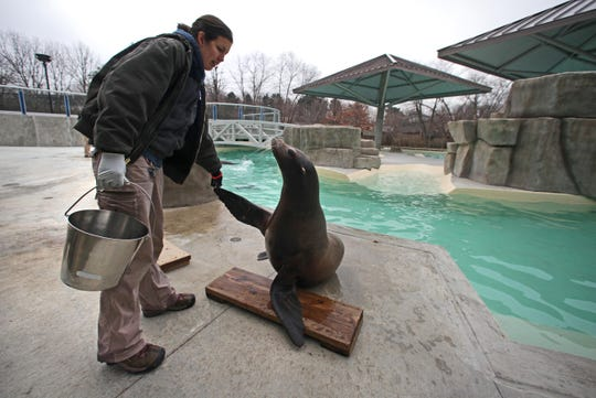 Blank Park Zoo  aquatic animal keeper Nicole Barker, left, works with a sea lion at a newly renovated water exhibit in December 2011.