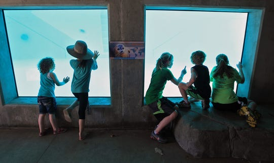 Children look through an underwater viewing area at the seal and sea lion pool in March 2012.