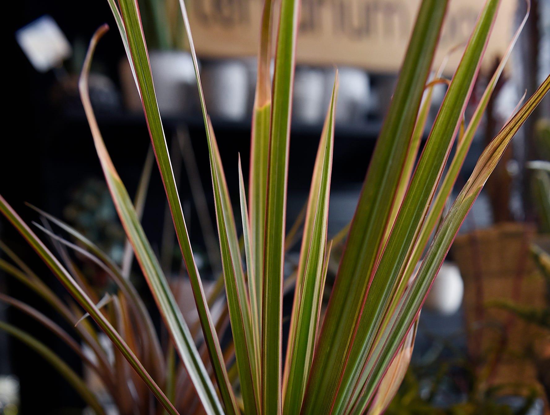 A head planter by Detroit ceramicist Cheryl English of Black Cat Pottery.