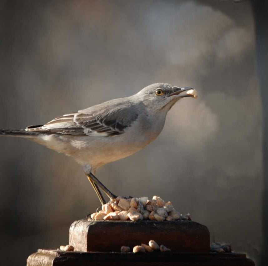 For the Birds: Should birds eat bread?