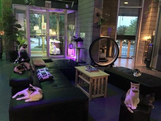 Cats at Organic Cat Cafe in Greenville, South Carolina.
