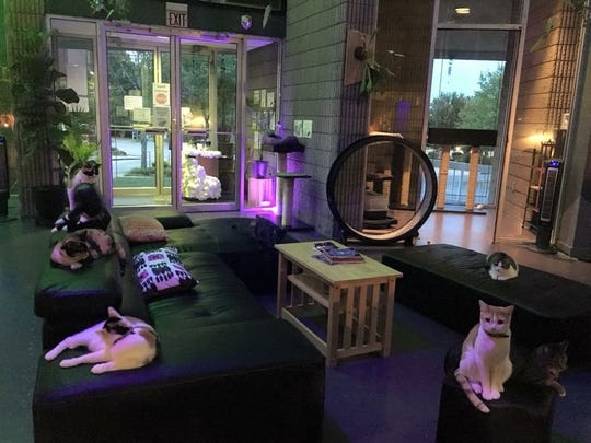Cats at Organic Cat Cafe in Greenville, South Carolina.