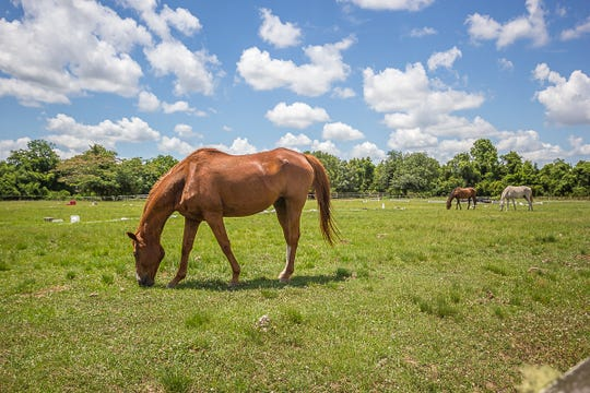 This home is located in a neighborhoods built to accommodate horses.