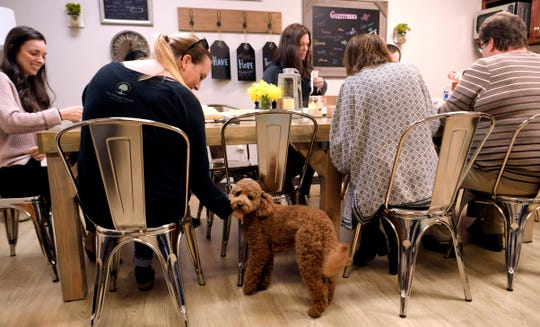 The Refuge Center for Counseling's therapy dog, Stellan, visits with staff and therapists during potluck lunch on Tuesday, Feb. 26, 2019.