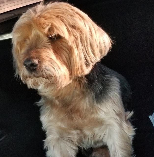 Lost dog, found: Jack's 300 mile journey back to his home