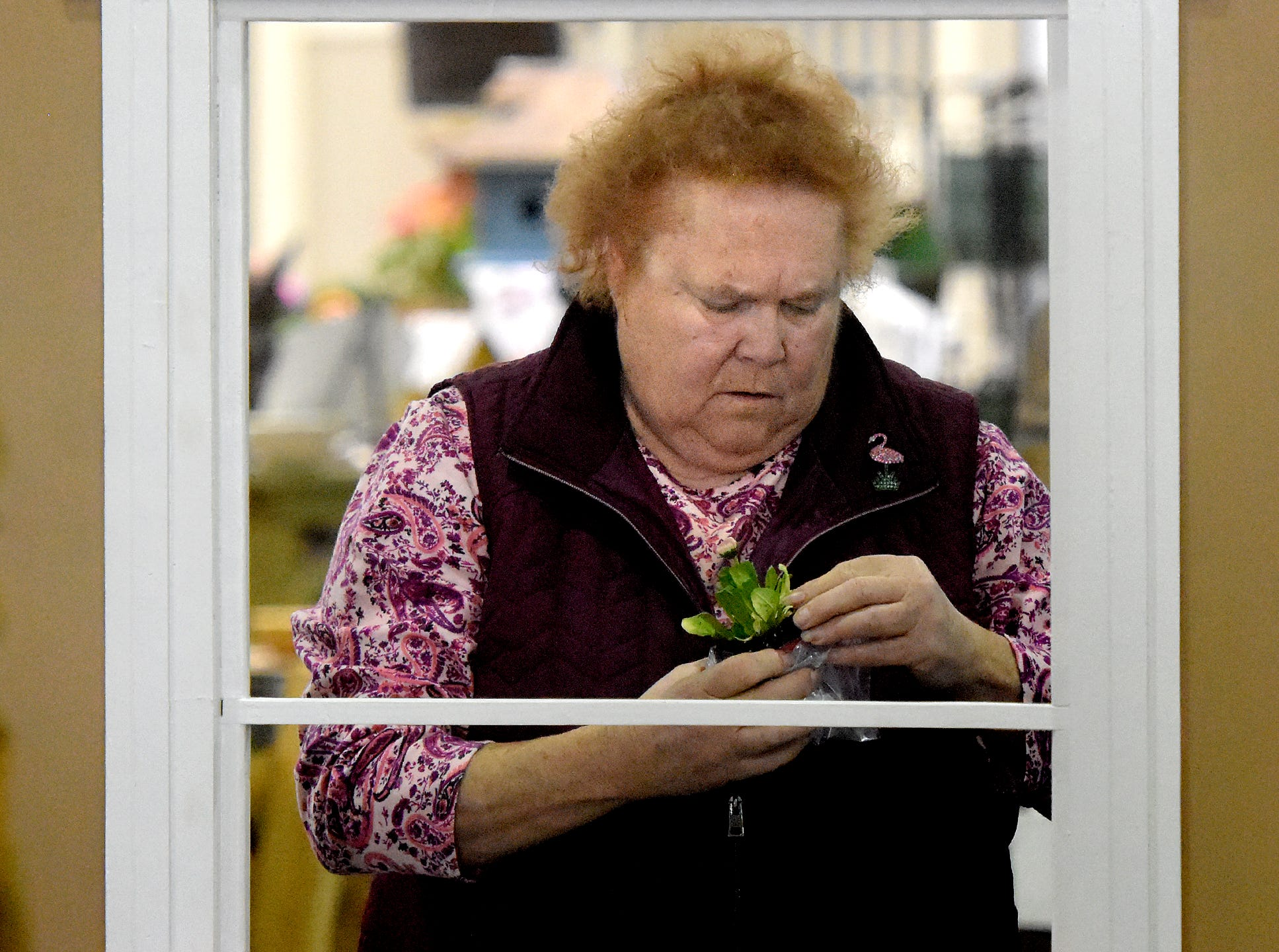 """Carol McDonald of Wrightsville places plants at the Penn State Master Gardeners exhibit at the PA Garden Show of York Wednesday, Feb. 27, 2019. The show, themed """"Flowers on Parade,"""" is in Memorial Hall at the York Expo Center March 1-3. Hours Friday and Saturday are 10 a.m. to 8 p.m., and Sunday 10 a.m. to 5 p.m. Admission for adults is $10. Children are free with multi-day passes and and senior discounts offered. Bill Kalina photo"""