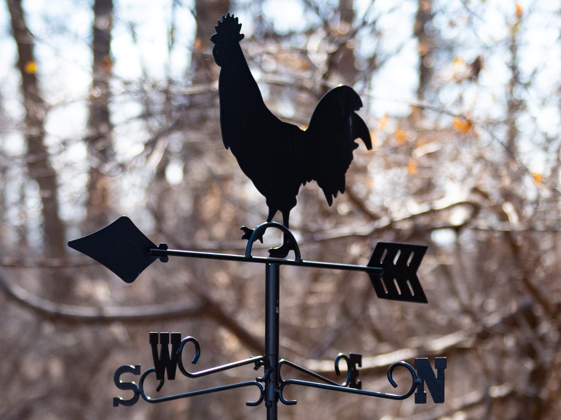 """A rooster weather vane stands outside of """"Crooked Coop Records,"""" a chicken coop that Jake Puliti and three of his friends converted into a writing and recording studio. Puliti is an """"American Idol"""" hopeful and his audition is scheduled to air on the show on March 10."""