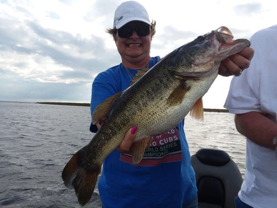 Capt. Nate Shellen's anglers Wednesday caught and released 35 bass in four hours of fishing time using wild shiners.