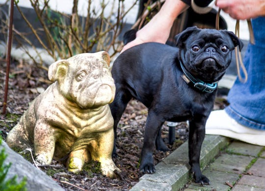 Edda the pug, sold on eBay, is caught in legal battle with