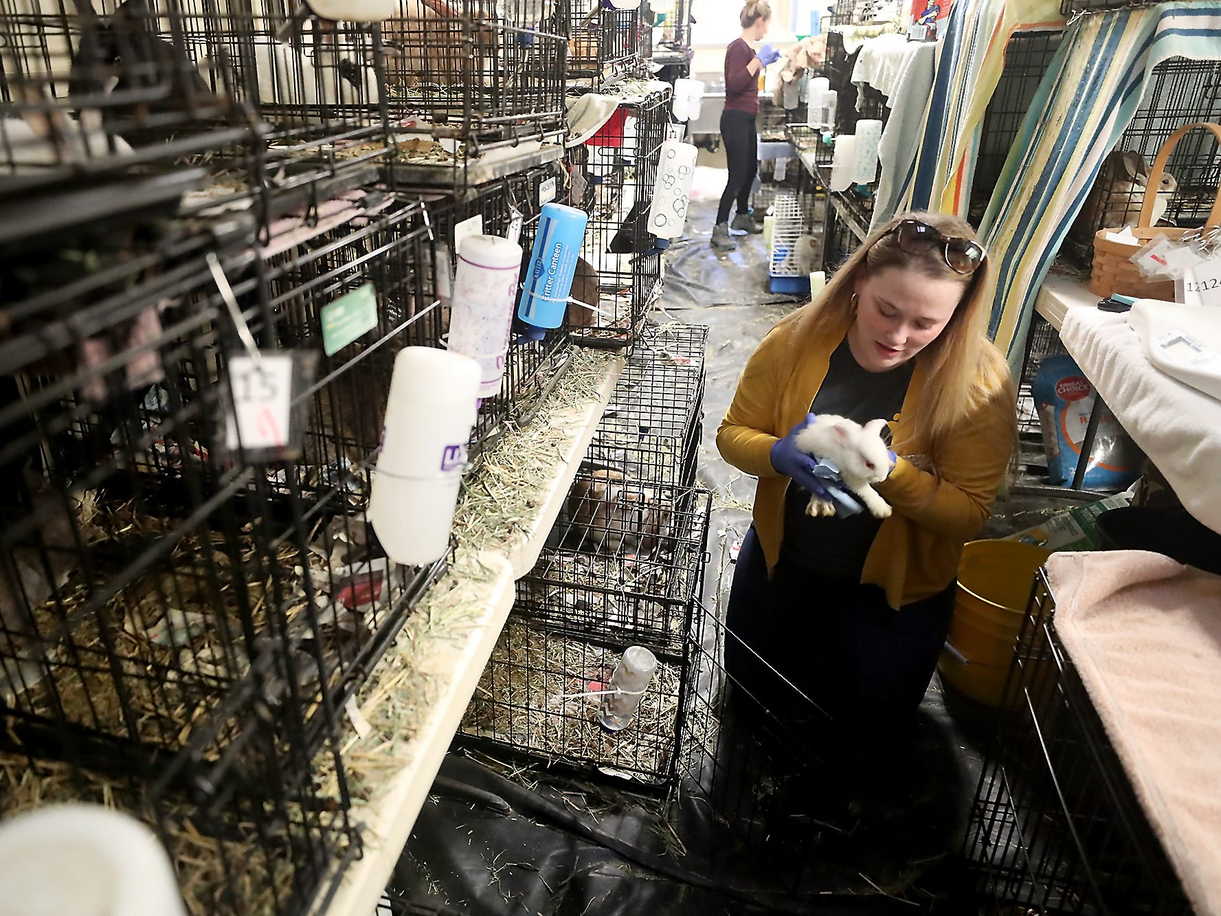 Sarah Moody-Cook, Director of Animal Welfare at the Kitsap Human Society, removes one of the rabbits from their cage as she and fellow shelter personnel process, give health checks to and ultimately work to get around 300 rabbits ready for foster homes and adoption on Friday, March 1, 2019.