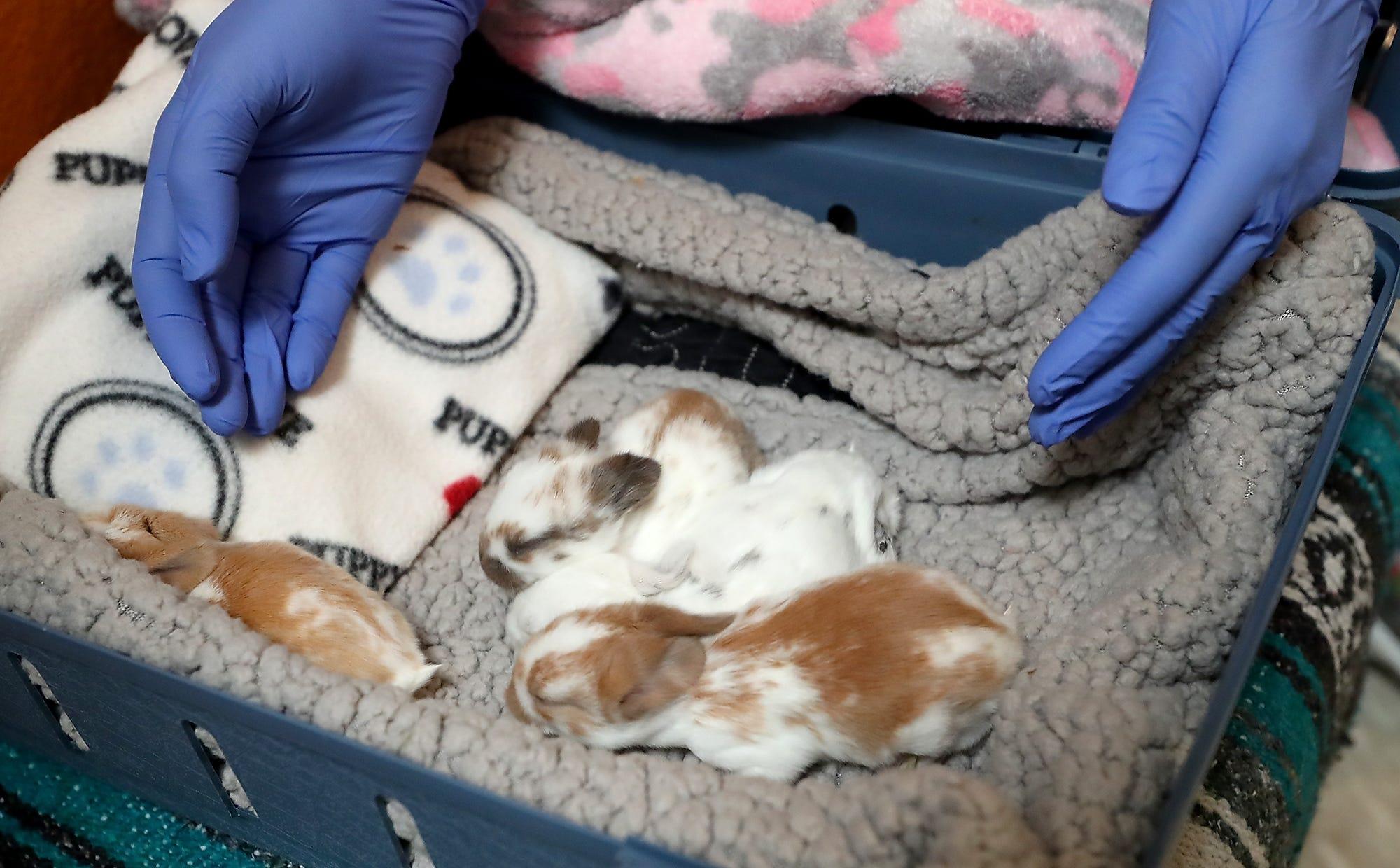KFC hot tubs, eyeball tattoos, shelter dogs: News from