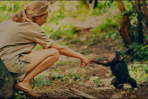 "The documentary ""Jane,"" about the life of Jane Goodall, is screened courtesy of Free Range Films March 10 at the Ground Zero Center for Non-Violent Action."