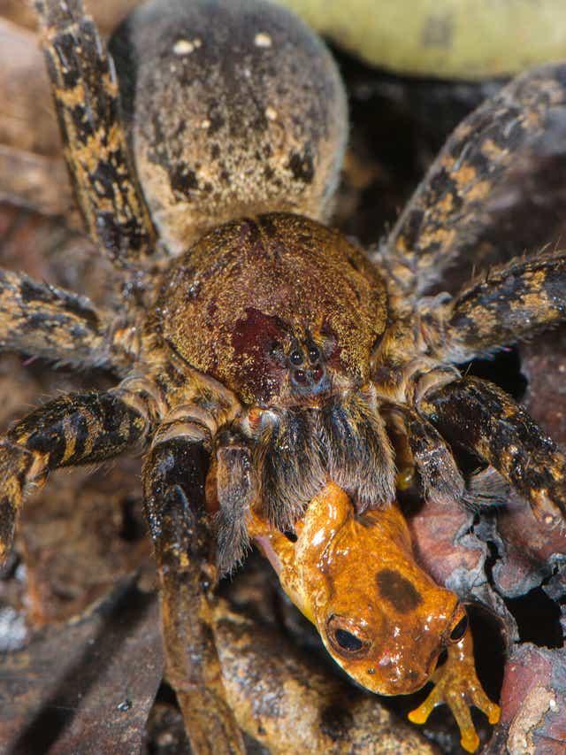 Um Captures Creepy Photos Of Spiders Attacking Prey