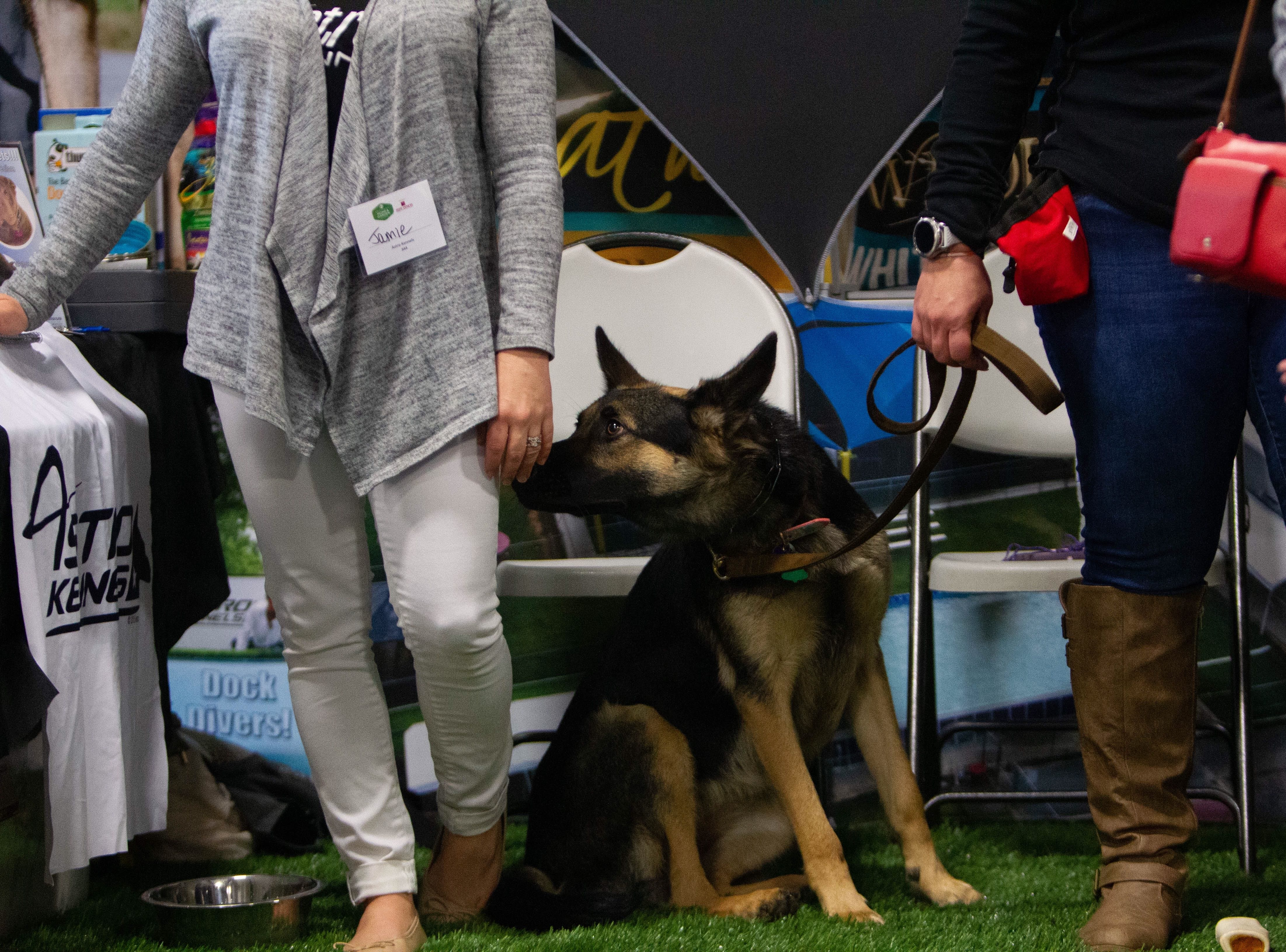 Zelda helps greet the crowd at the Home and Garden Show at the Greenville Convention Center on Friday, March 1, 2019.