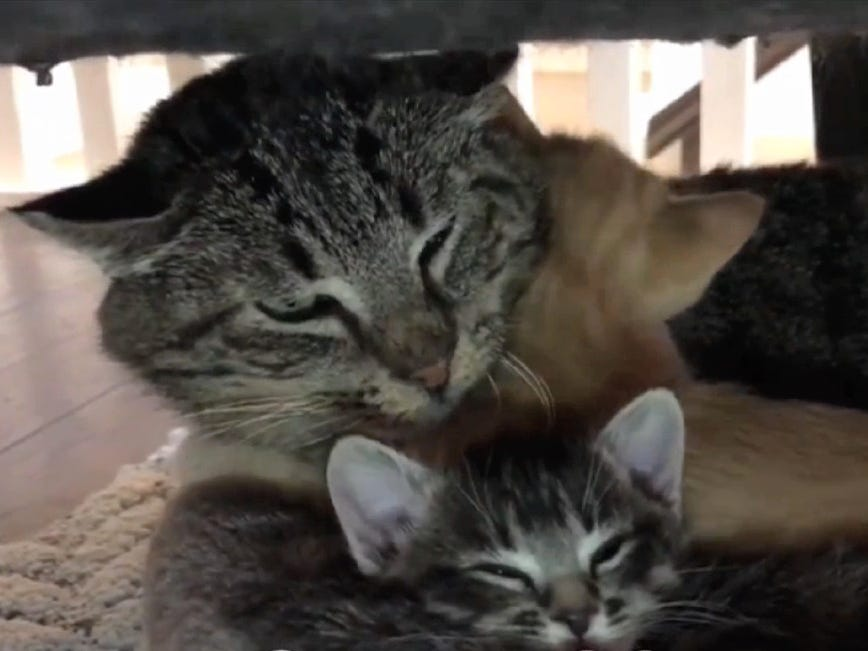 "Cats being cats take a break in a clip from the 2019 edition of ""CatVideoFest."""